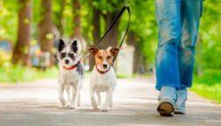 Köpek Tasması Çeşitleri