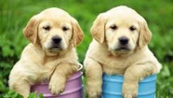 Köpekler Hakkında En Çok Merak Edilenler