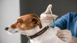 Köpeklerde Karma Aşının İçeriği