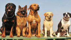 Köpeklerde Tüy Dökülmesinin En Önemli 5 Sebebi