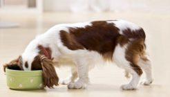 Köpeklerde Beslenme İncelikleri