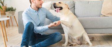 Köpeklerde Topallamaya Neden Olan Faktörler