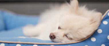 Köpekler Neden Kilo Verir?