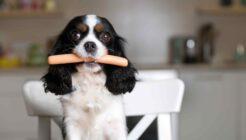Köpekler Çiğ Gıda Sever mi?