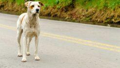 Sokak Köpekleri için Hangi Mama Tercih Edilebilir?