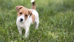 Yavru Köpeğiniz İçin Önemli Eğitimler