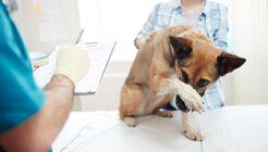 Köpeklerde Titremeye Neden Olan Faktörler
