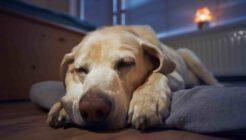 Köpekler Rüya Görür Mü?
