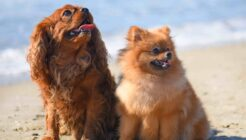 En Tatlı Köpek Türleri