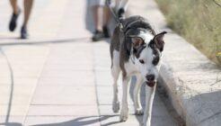 Köpeğinize Egzersiz Yaptırmanın Faydaları