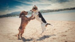 Köpeklerde Epilepsi Nasıl Anlaşılır? Tedavisi Var mı?