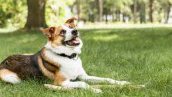 Köpekler için Zehirli Bitkiler Hangileri?