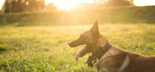 Köpeklerin Eğitiminde İhtiyaç Duyulan Ekipmanlar Nelerdir?