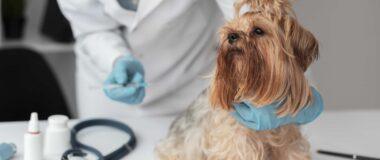 Köpeklerde Aşılamanın Önemi ve Bilinmesi Gerekenler