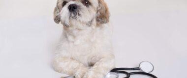 Köpek Alerjisi Belirtileri Nelerdir, Tedavisi Var mı?