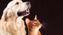 Kedi ve Köpeğin Aynı Evde Yaşaması Mümkün mü?