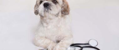 Epilepsili Köpek Bakımı Nasıl Yapılmalı?